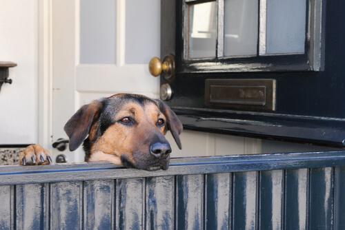 perro y puerta