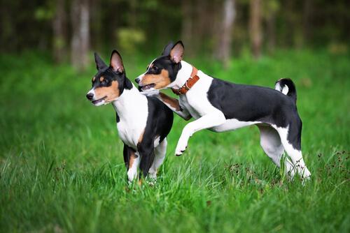 Las razas de perros más antiguas del mundo