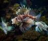 pez exotico