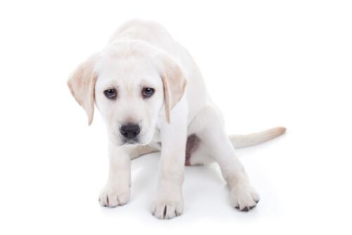 Qué hacer si un perro tiembla