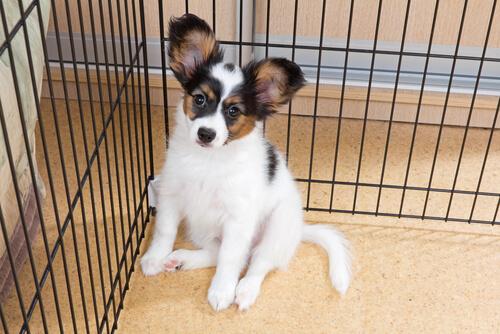 Residencias caninas y guarderías de mascotas, ¿cómo saber elegir la más adecuada para mi perro?