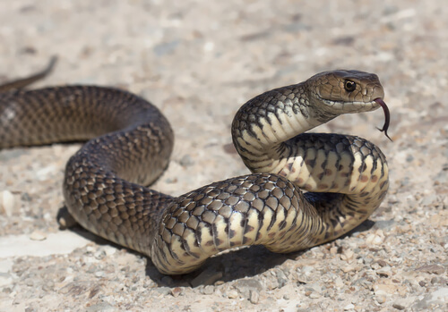 Serpiente en el suelo
