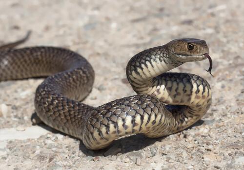 Las serpientes en la cultura popular