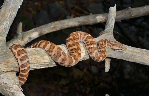 Serpiente en una rama