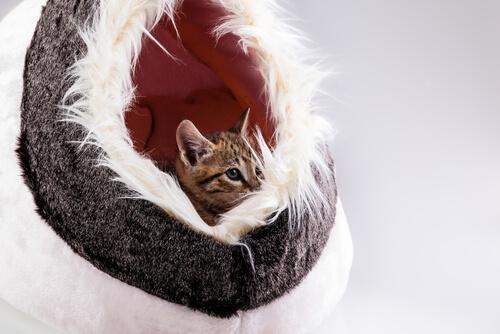 Ideas de camas divertidas para gatos