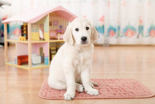 casita perro