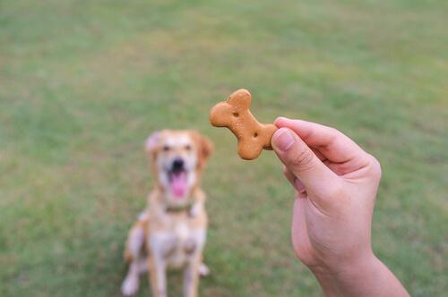 galleta perro