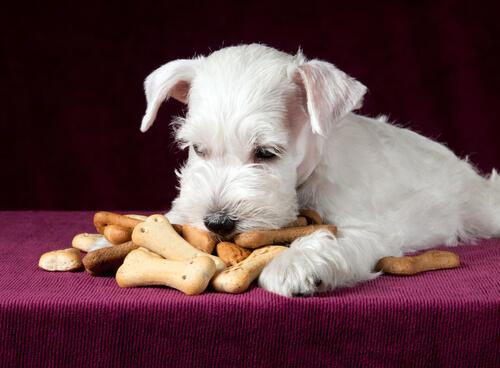 Recetas caseras para que tu mascota disfrute de una comida deliciosa