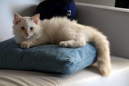 Entiende lo que significa cada movimiento del rabo de tu gato