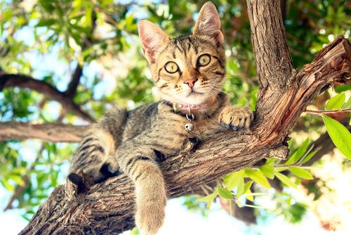 Parque de atracciones para tu gato: constrúyele un árbol