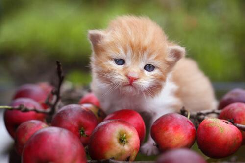 Qué son los antioxidantes y qué papel desempeñan en la nutrición de mascotas