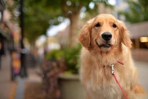 Un perro se lanza contra autobús para proteger a su dueña
