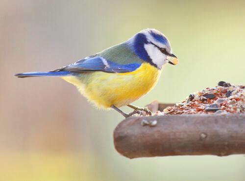 ¿Cómo alimento a un pájaro que me he encontrado en la calle?
