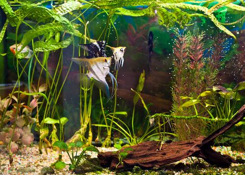 Sillas de ruedas para peces: un invento para mejorar la calidad de vida