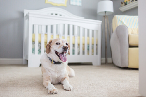 perra embarazada
