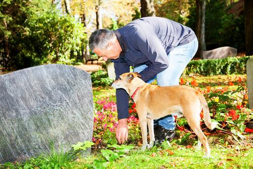 Un perro vive en la tumba de su dueño y se niega a irse