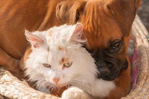 ¿Qué son las zoonosis?