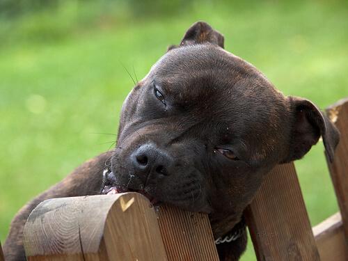 ¿Se pueden evitar los mordiscos de los cachorros?