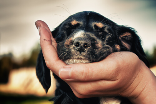 Cabeza de perro apoyada en una mano