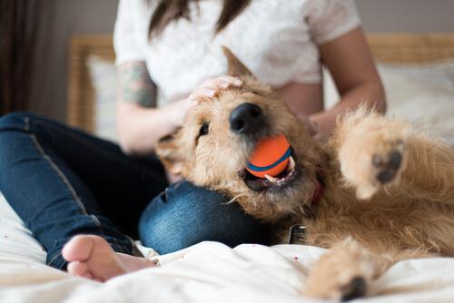 Cachorro brinca com bola