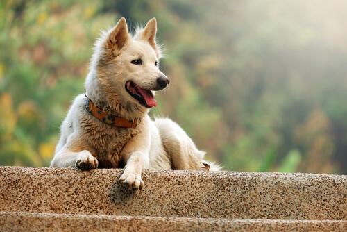 El comportamiento estereotipado en los perros