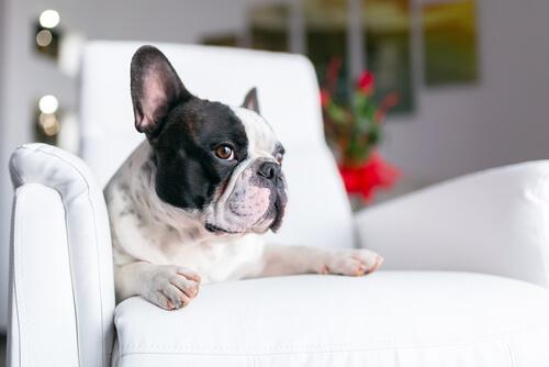 Consejos para combatir el mal olor de las mascotas
