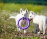 perros juguete