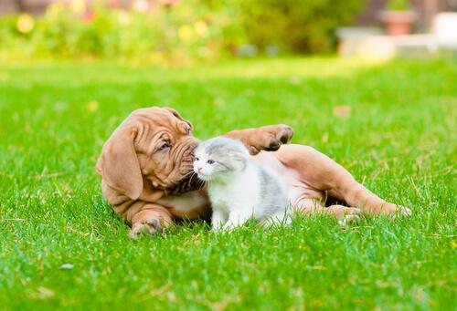 La esterilización de perros y gatos: evita nacimientos indeseados