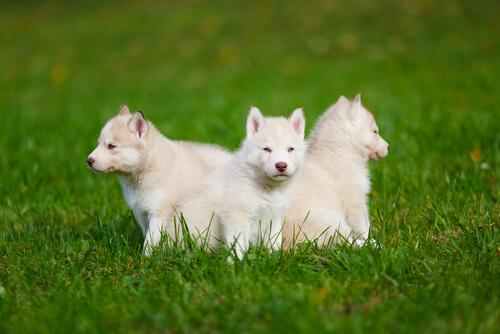 Alimentación especial para perros durante su primer año de vida