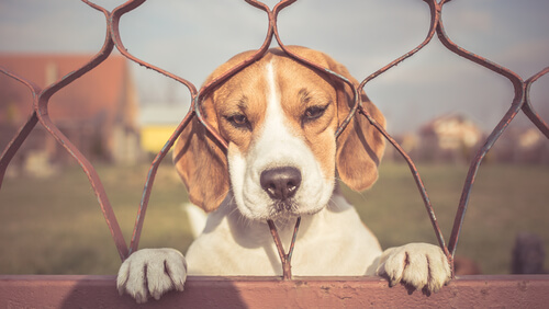 Cómo luchar contra la ansiedad por separación de mi perro