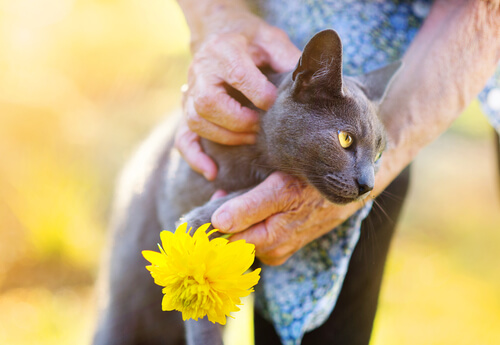 ¿Qué beneficios aportan los gatos a la salud?