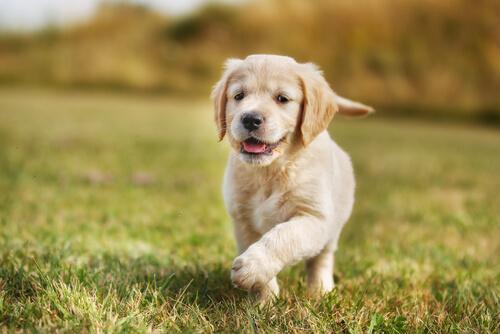 Alimentación para cachorros con digestiones sensibles