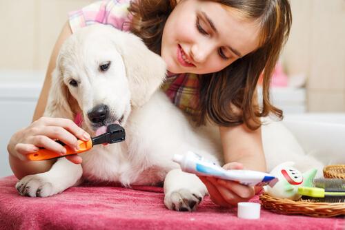 Dona escovando os dentes do cão