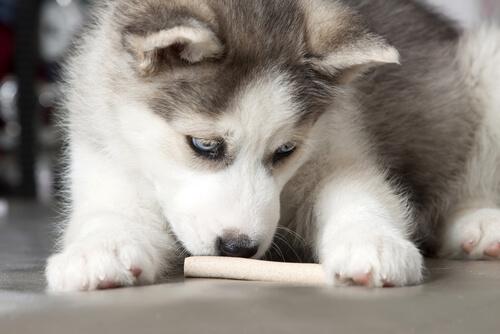 comida humana a perros