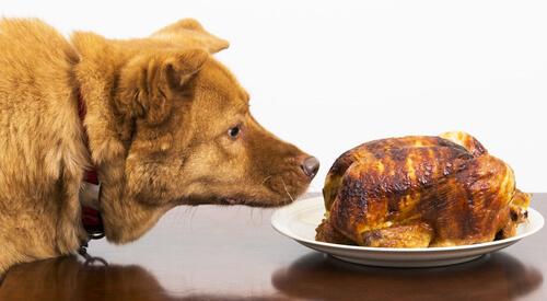 Comida para perros según sus características