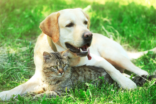Tratamiento de la diabetes en perros y gatos