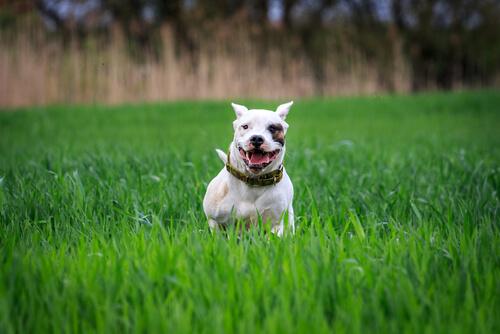 Responsabilidad con perros potencialmente peligrosos