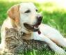 ecologico con tu mascota