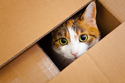 gato dentro de uma caixa de mudança