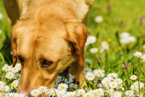 Cómo actuar si tu mascota sufre una intoxicación