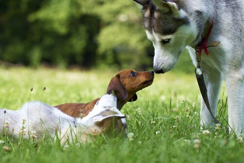 Problemas de malcriar al perro