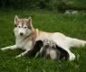 perra y crias