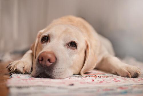 Luchamos contra cálculos urinarios en perros y gatos