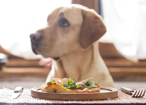 perro come verdura