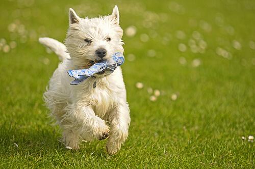 El refuerzo positivo: enseña a tu perro y hazle feliz