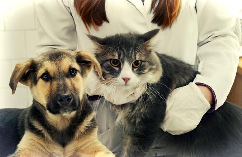 Perro y gato en el veterinario