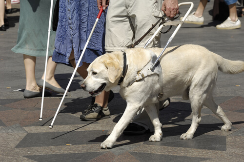 Cachorro com peitoral