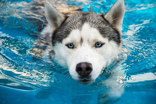 Cómo actuar en caso de ahogo en mascotas