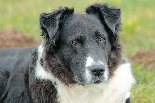 Dermatitis o irritación de la piel en perros