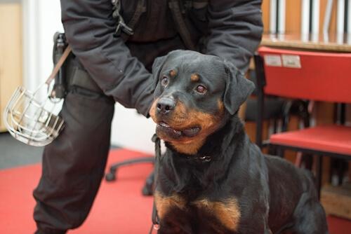 Entrenamiento de los perros anti-pirómanos